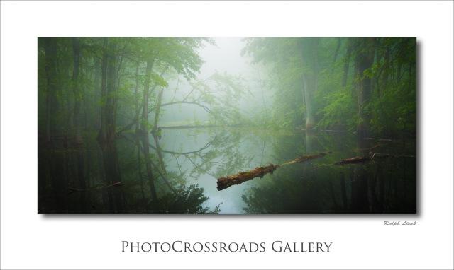Fletcher Creek Forest Swamp Ontario