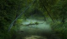 Summer Creek Kawarthas Ontario